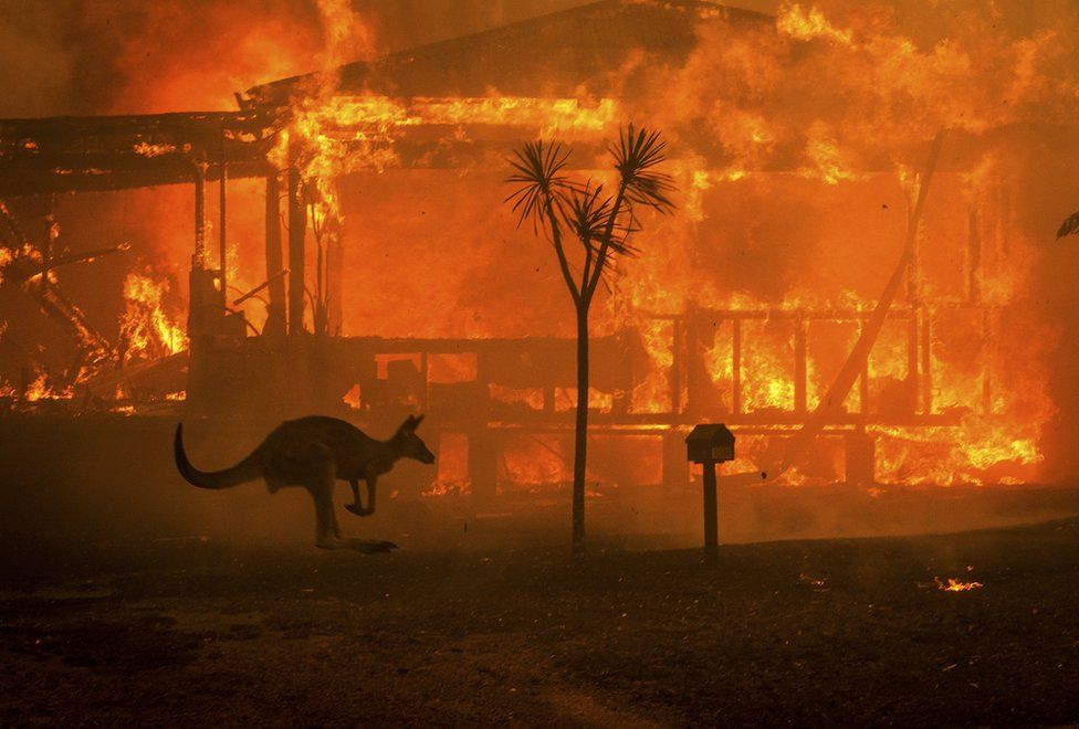 Mint announces '20 for 20 Pledge', aiming to donate $1m on behalf of its customers for bushfire relief